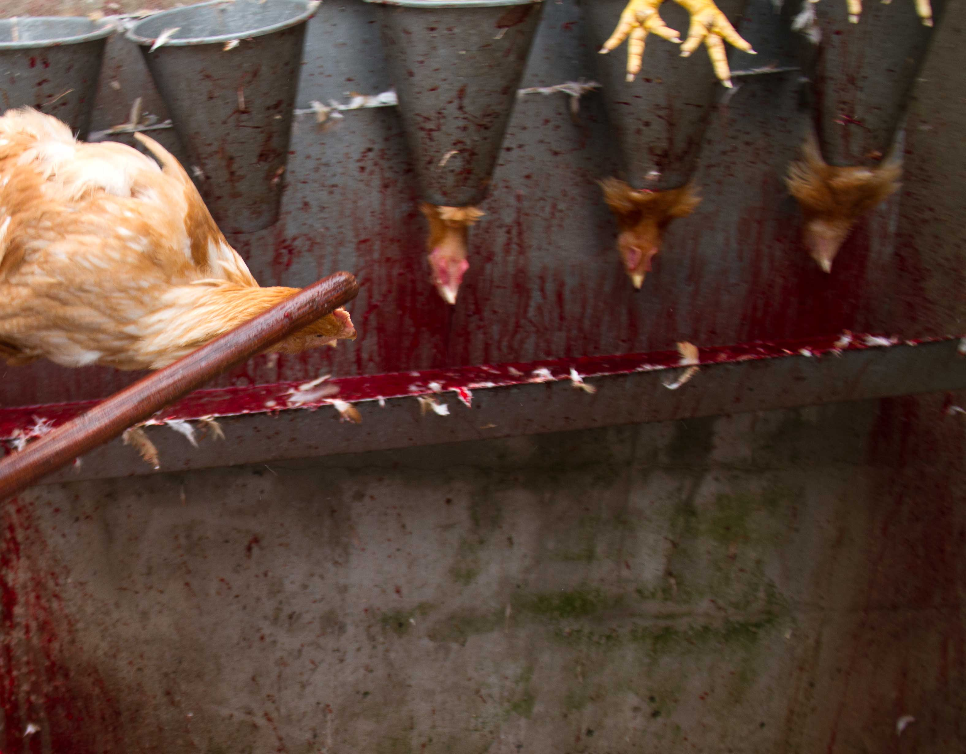 Tierschlachtung