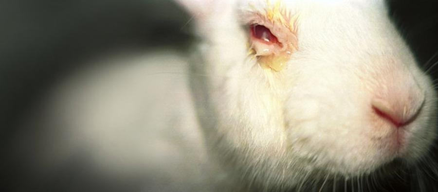 Kosmetikfirmen zahlen für Tierversuche in China - von Harald Ullmann