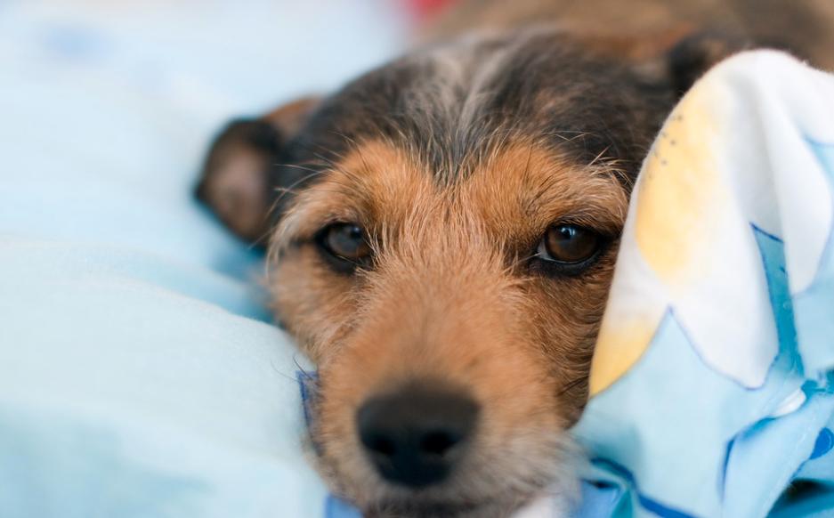 Über Sex mit Hunden und die Grenzen der Toleranz - von