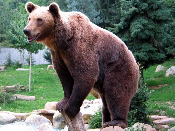 Bären Töten Menschen